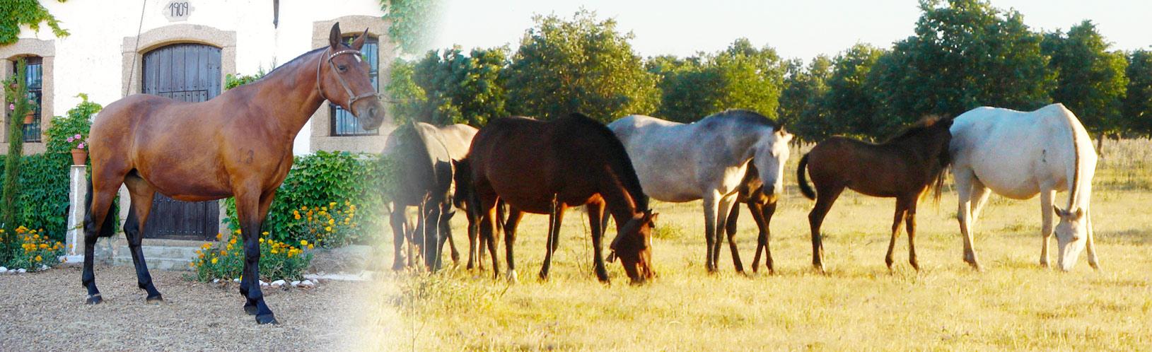 caballosslideshow